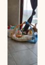 avis Tapis d'éveil interactif : Lumi tapis des petits copains par Karine